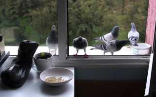 Защита от птиц на подоконнике